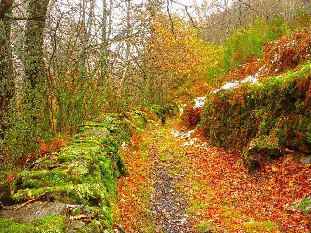 Guimara, otoño