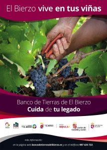 Cartel Campaña viñedo 2020-21