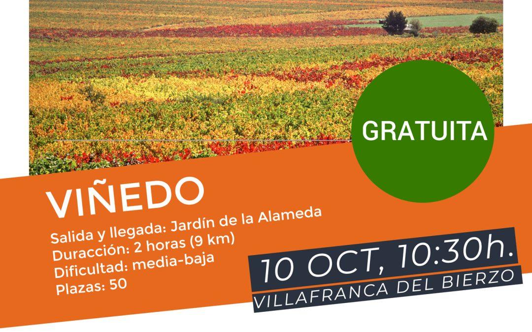 Villafranca del Bierzo acoge el domingo 10 de octubre la Ruta por la Calidad del Viñedo